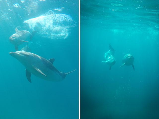 DolphinUWverts