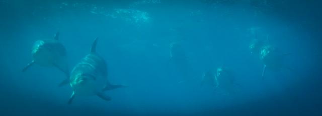 KeyDolphins